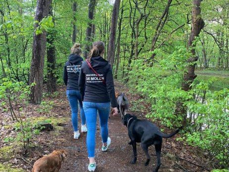Na werktijd even wandelen in het bos